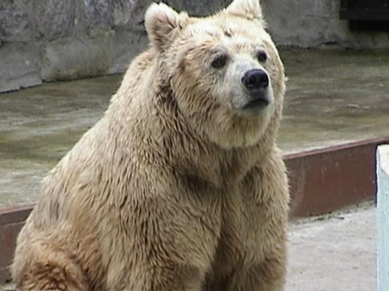 Kharkov Zoo: Bear