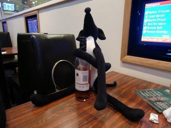 Nottingham Greyhound Stadium : Our Greyhound enjoying a drink in the restaurant