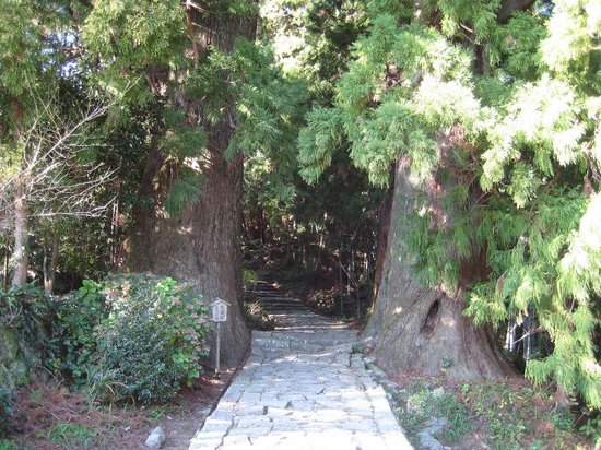 Nachikatsura-cho, Japón: 夫婦杉