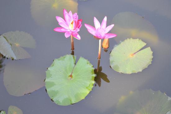 The Oasis Villa: Teich mit Pflanzen