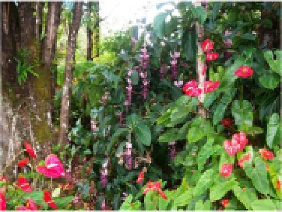 Coconut Cottage Bed & Breakfast: The Secret Gardens