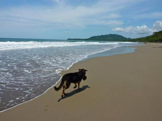 Puerto Viejo Beach: Black Beach My Dog