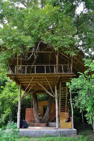 Back of Beyond - Dehigaha Ela: tree house
