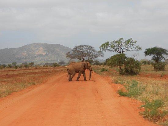 Diani Beach, Kenya: elephant