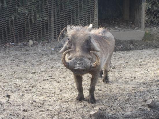 Монтгомери, Алабама: A hog