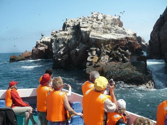 Paracas, Perù: Avistamiento de la Fauna Marina