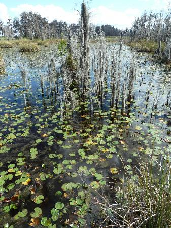 Tibet-Butler Preserve: Wish the Lily Pads were in bloom!