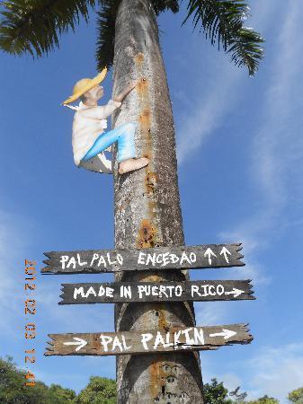 Made In Puerto Rico: Jibaro subiendo a la palma