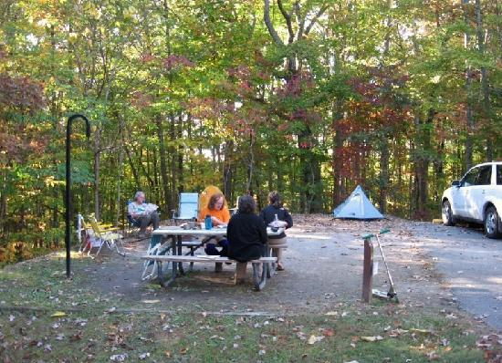 Big South Fork National River & Recreation Area: campsite at Bandy Creek Campground
