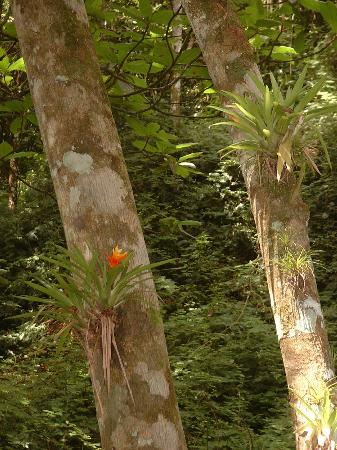 Altos De Campana National Park: bromeliads in Parque