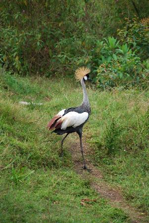 Abacus African Vacations Day Tours : Ugandan National Bird