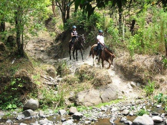 Horse Trek Monteverde