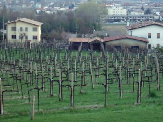 Hotel Astoria: le vigne dallo hotel
