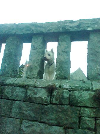 Bron Eifion Country House Hotel: our westie in the grounds