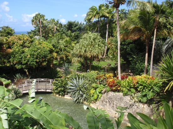 La cascade photo de jardin botanique de deshaies for Bd du jardin botanique 50