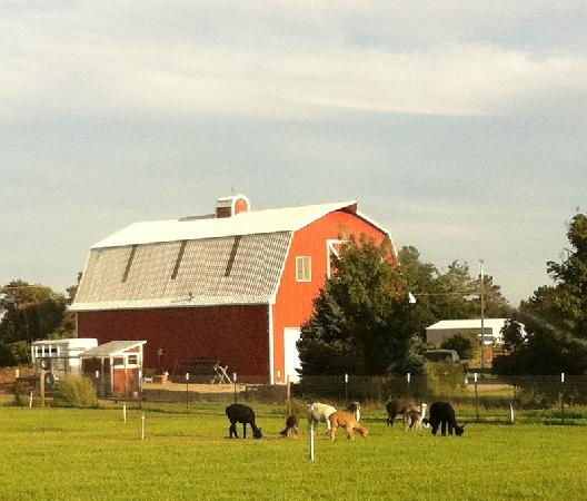 Spring Harvest Fiber Mill: Pasture and Barn