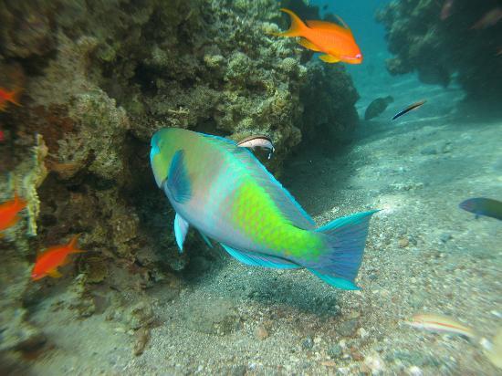 Snuba Dive Resort: What a pretty fish