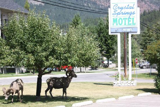 Radium Hot Springs, Kanada: Sign