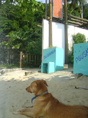 Pousada Tagomago Beach Lodge: perrito en la puerta