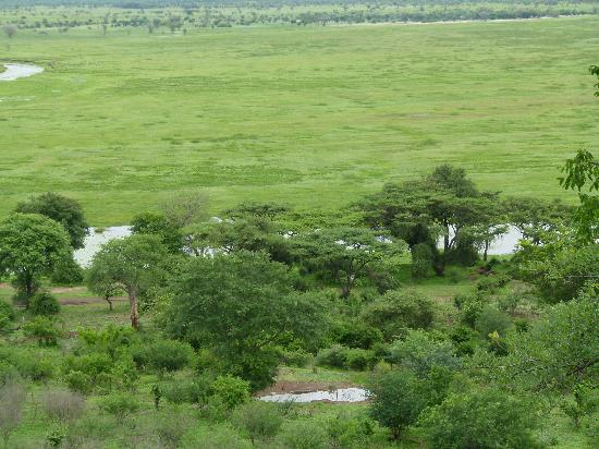Muchenje Safari Lodge: Floodplain in front of lodge during green season