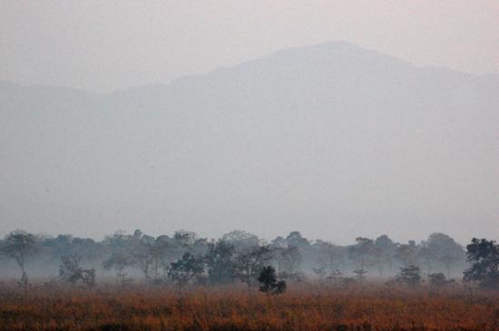 Morning in Manas Wildlife Sanctuary