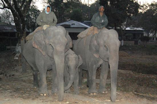 Assam, India: Tourist  elephants at gate
