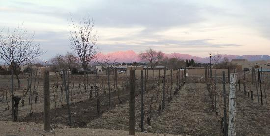 St. Clair Winery & Bistro: Outlook from vineyard are at NEW location as of 1/26/12