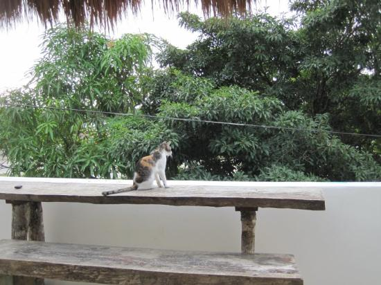 El Jardín de Frida: Front balcony with our cat friend :)