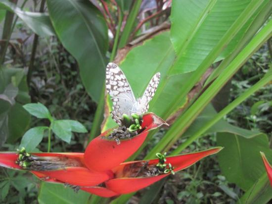 El Jardin de Frida: Butterfly in the garden