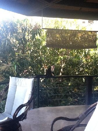 Tulemar Resort: the little monkey who came to visit