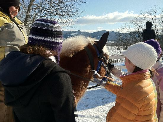 Farm by the River Bed and Breakfast with Stables: Meeting the horses