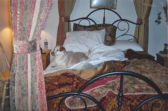 The Inn at Restful Paws