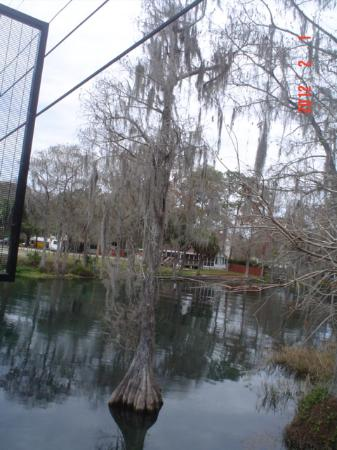 Rainbow Springs State Park: kayak entrance in Dunnellon