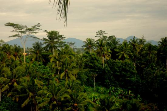 Alam Indah: part of the view from our room