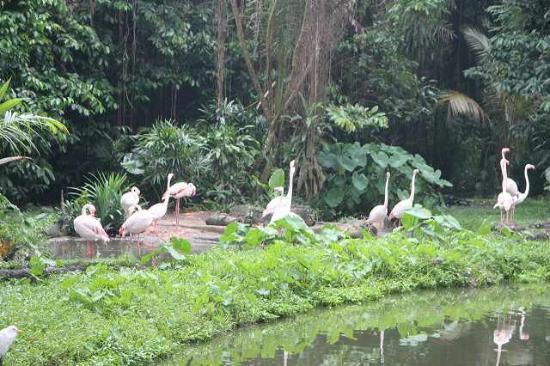 Singapore Zoo: シンガポール動物園2