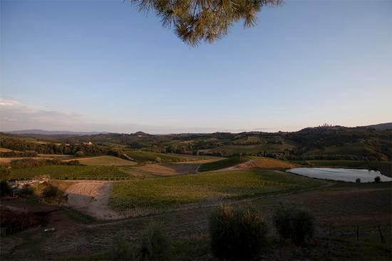 Fattoria Poggio Alloro: View of the farm