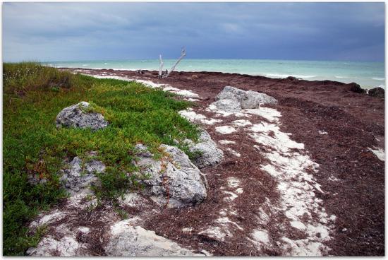 Bahia Honda State Park and Beach : Bahia Honda, Jan. 30