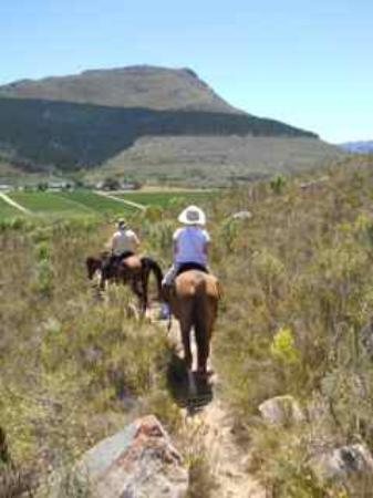 Paradise Stables: Mountains