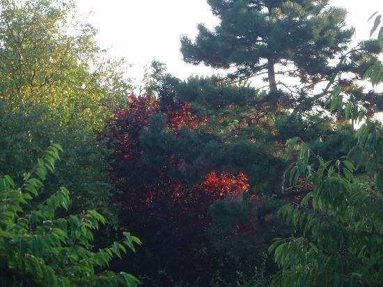 Du Côté de Rueil : Matin dans les arbres du jardin