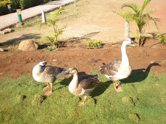 Adventure Plus: Geese