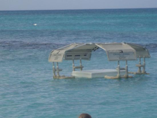 Grand Cayman Marriott Beach Resort: The Floating Tables!