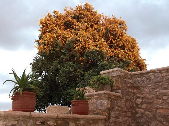 Artemisia Resort: Carrubo
