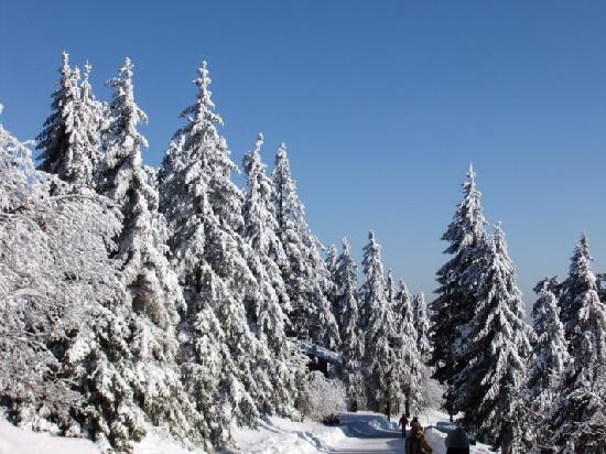 Schwarzwaldhochstraße: Schwarzwald im Winter