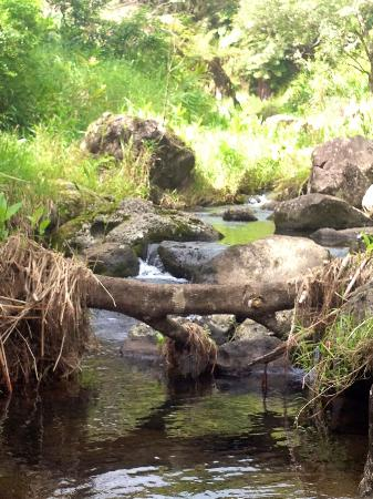 Hawaiian Walkways: One of the many streams we encountered.