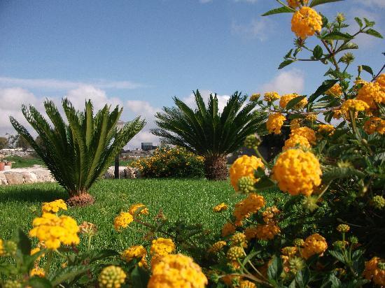 Artemisia Resort: Giardino