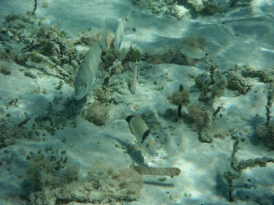 Mikri Vigla Beach : Sotto all'acqua