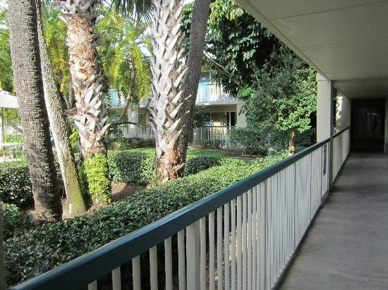 BEST WESTERN Downtown Stuart: Outside the rooms