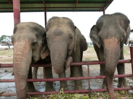 Yitor - Picture of Elephantstay, Ayutthaya - TripAdvisor
