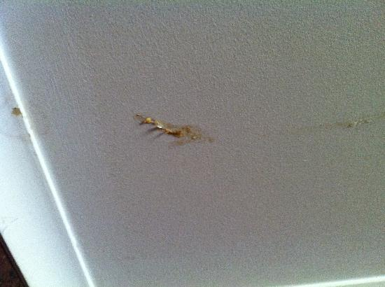 Midland, Australia: Is that brain matter on the ceiling?