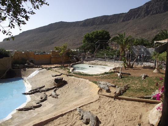 Cocodrilo Park zoo : Store Cocodrilo dam